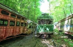 В США имеется заросшее лесом кладбище старых трамваев (ФОТО)