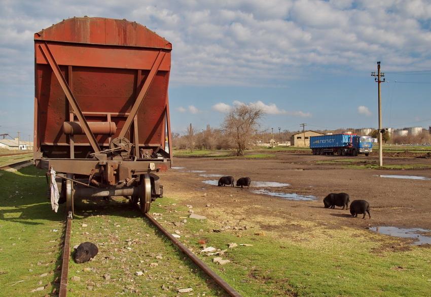 Погрузка зерновозов на станции Березино и свиньи