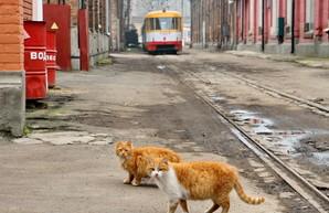 В электротранспорте Одессы увеличен список льготных категорий пассажиров