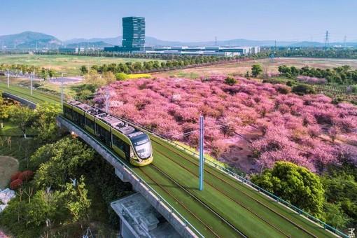 Фото дня: трамвай и цветущие бегонии в Китае