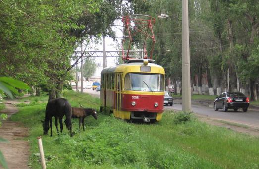 В Украине озеленение трамвайных путей на выделенных полосах может стать обязательной нормой
