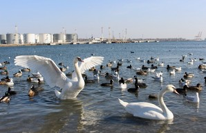 В порту Черноморск под Одессой появится инновационная система мониторинга загрязнения акватории