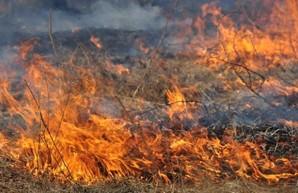 Из-за масштабного пожара в Лиманском районе Одесской области чуть не загорелась электричка