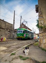 Одесский электротранспорт: коты, голуби и обезьяны (ФОТО)