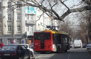 Из-за упавших деревьев в Одессе остановились трамваи и троллейбусы