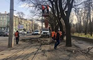 Для того, чтоб обеспечить работу городского транспорта, коммунальщики в Одессе убрали почти 200 упавших деревьев