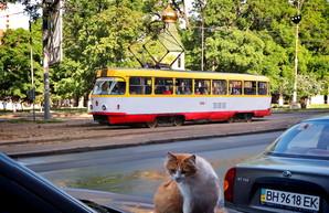 Шмыгаль предупреждает: общественный транспорт могут снова ограничить