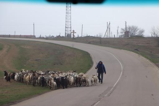 В Одесской области отремонтируют дорогу от Болграда до села Зализничное за 70 миллионов