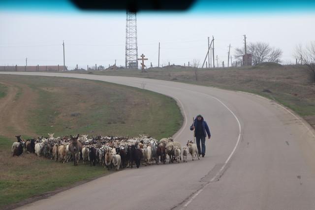 В Одесской области снова пытаются провести тендер на ремонт дороги от Болграда до Арциза